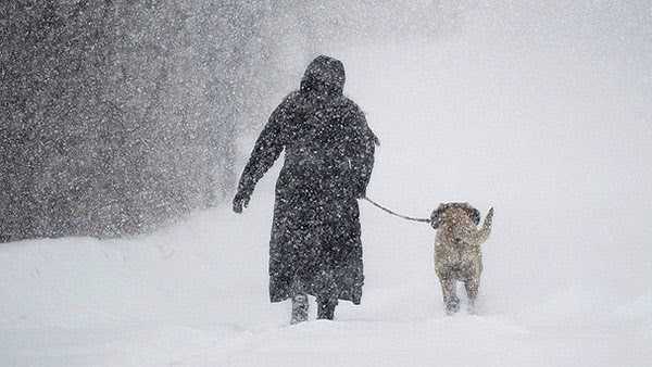 Walking-Dog-Snowstorm